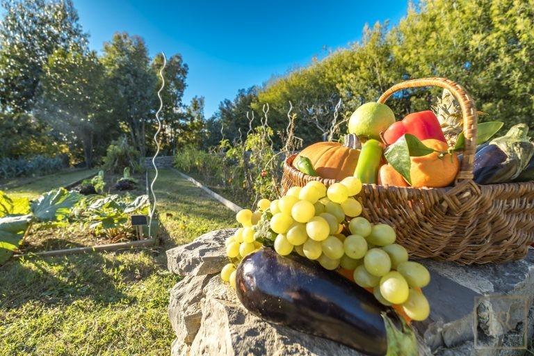 Villa Sea Views 8 BR - Vallauris, French Riviera exclusive rental For Super Rich